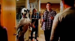 Quand les deux meilleurs amis de l'homme, le chien et la bière, sont réunis dans une pub